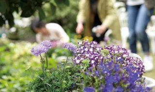 手入れされた庭・お花