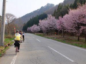 南会津サポートクラブ お花見サイクリング
