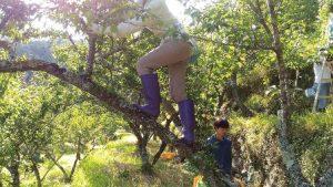 木に登る男性。長靴をはいている