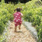 大小島農園P04_09_W-060