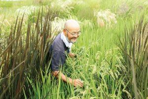 いろいろ米の種とり田んぼの中にいる笑顔の上野さん