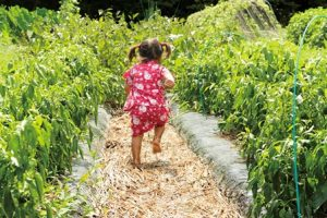 小島農園の中。畑の作物の間を走る小さなこどもの後ろ姿。