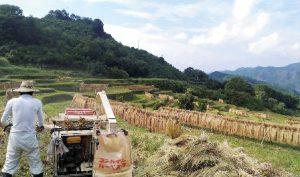 三十路男子の暮らす里山の風景。米の収穫をむかえた段々畑。
