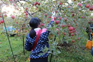 真っ赤なりんごに手をのばしている女の子の後ろ姿。