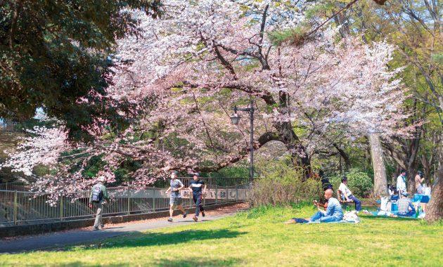 公園の桜の下を走る男性2人。芝生にはギターをひく男性や集まって食事をする人たちも