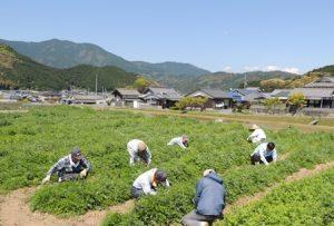 青空の下、畑作業をするひとたち。畑のむこうには古い民家がみえる
