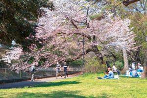 桜の下、公園を走るひとたち。芝生ではギターを奏でる男性、集まって食事する人々も。