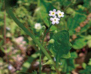 小さな白い花3つ。