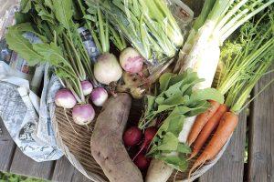 だいこんや農園の野菜セット
