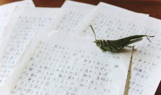 びっしり書かれた何枚もの原稿用紙。用紙の上に草でつくったバッタが置かれている
