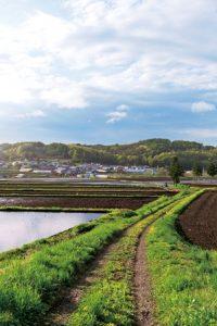 軽米の美しい景色。田んぼのむこうに山並みがみえる