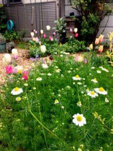 自然工房めばえの庭。コスモスやチューリップが咲いている